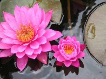 fertility Chinese medicine